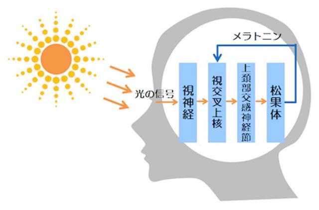 No.114 ストップ温暖化?